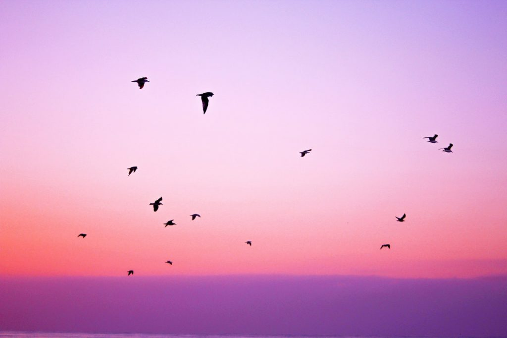 Birds flying across pink sky